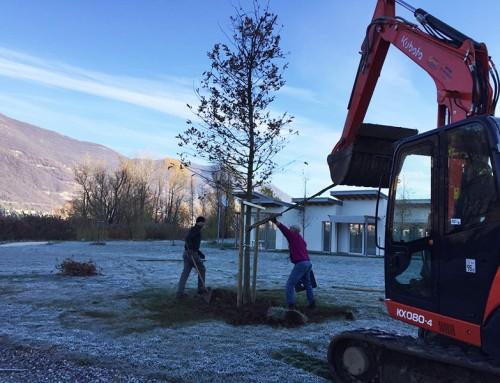 Nuovi alberi d'alto fusto